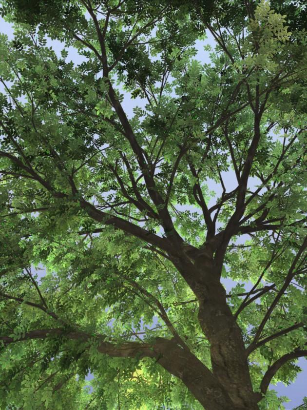 treesketch-30-Steven-Longay-11