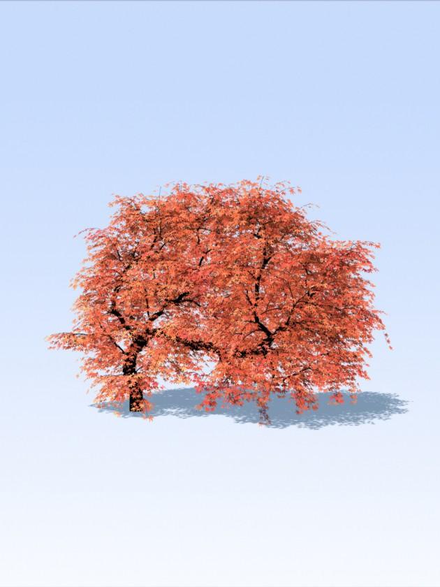 treesketch-30-Steven-Longay-13