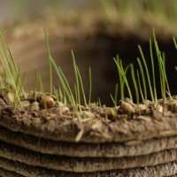 A Chia Pet for the MakerBot Generation?  3D 'Grass Printer' Prints Objects out of Grass