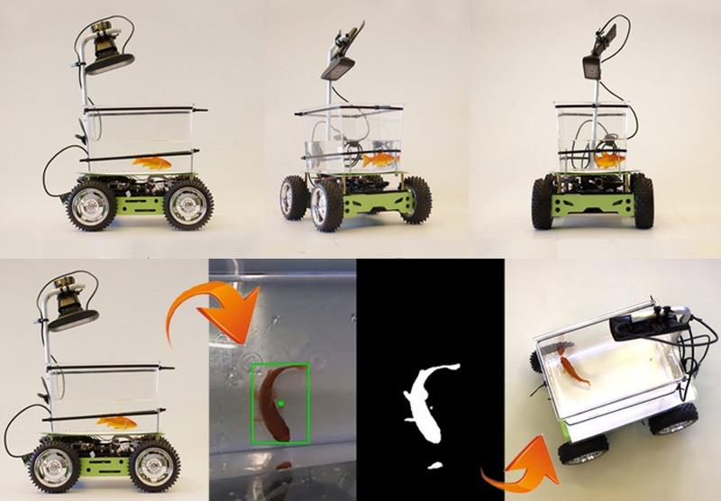 fish-car2