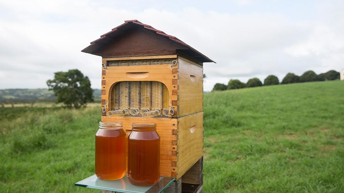 flow-hive-beekeeping-tap-03
