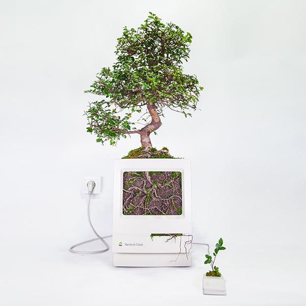 Plant_you_Mac_macbonzai_monsieur_plant_2016_1_ok_carre