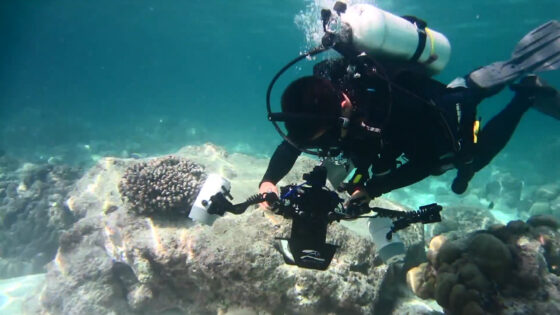 1. Section of reef scanned