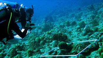 A diver using scientific protocol to monitor the health of coral reefs