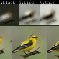 This New AI Platform Can Sketch Images Based on Words Alone