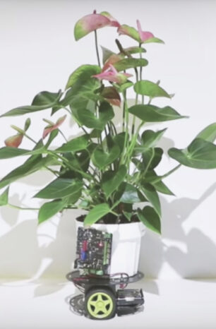 MIT Media Labs' Plant-Powered Robot is Paving the Way for Cyborg Botany