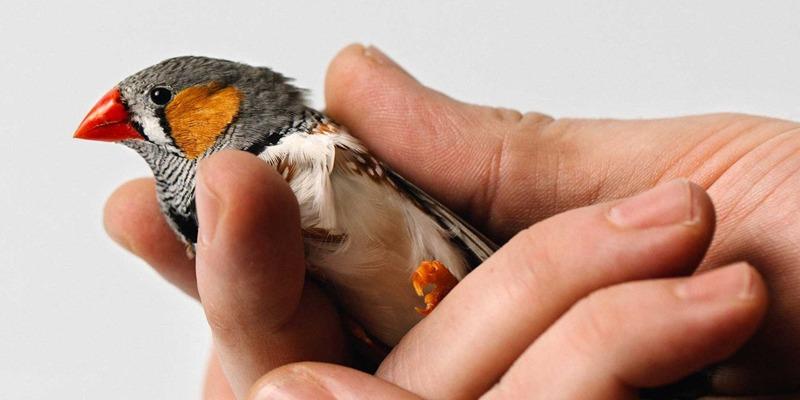 What Bird Brains Can Teach Self-Driving Cars