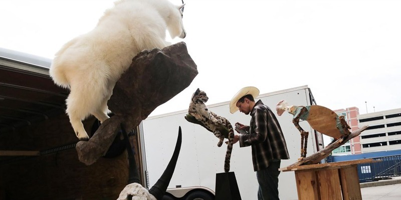 At the World Taxidermy and Fish Carving Competition