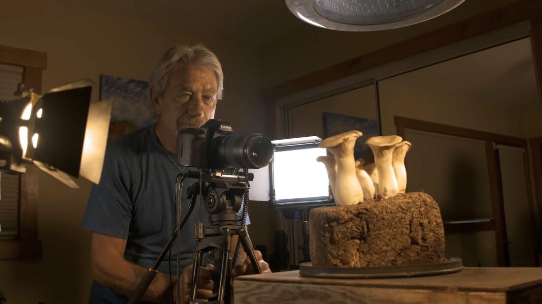 fungi time-lapse capture